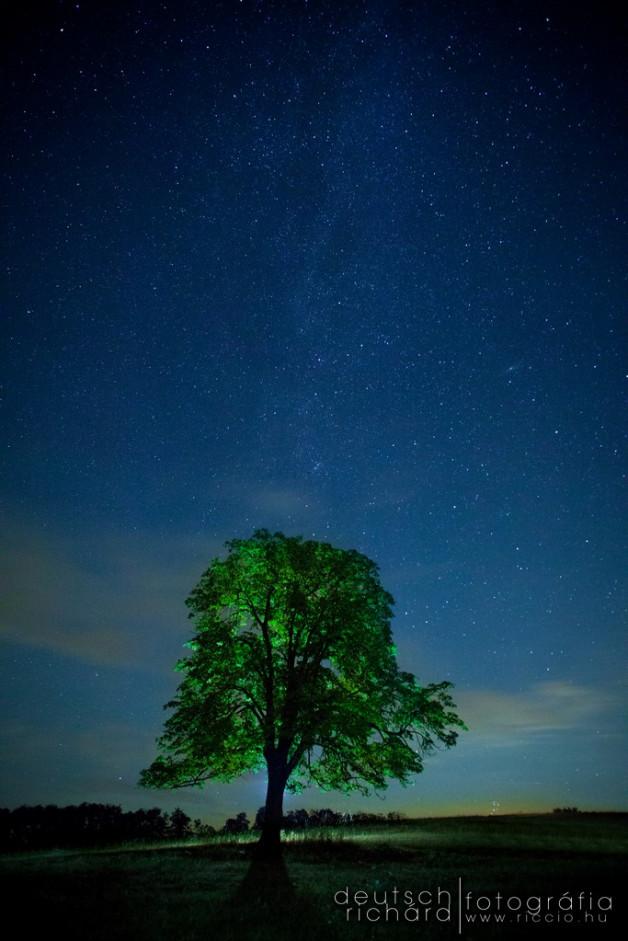 Éjszaka a csillagos ég alatt